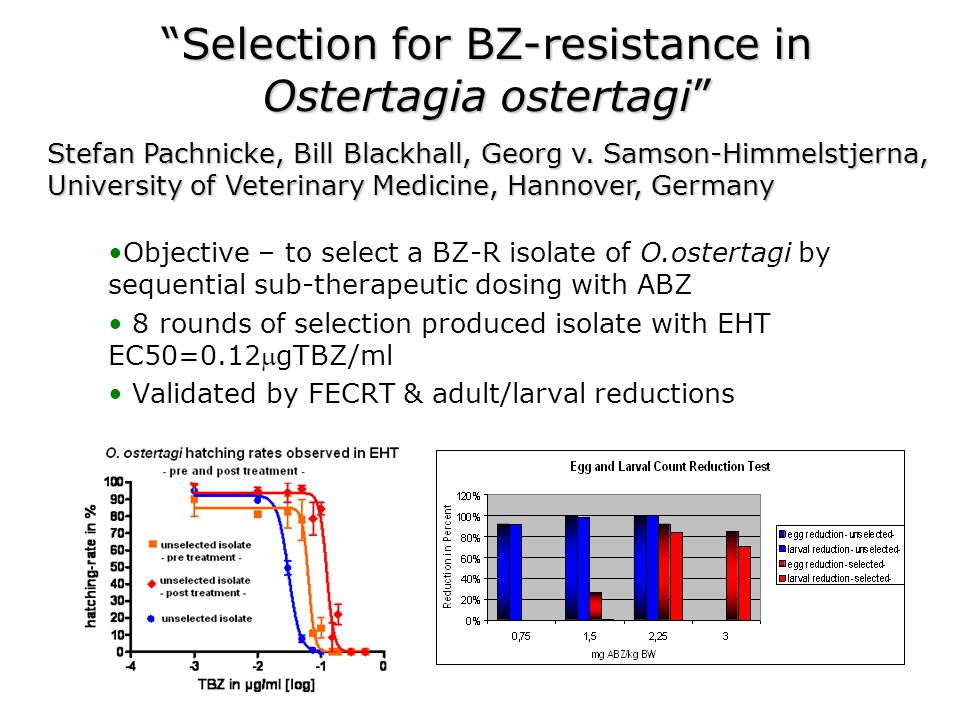 Selection for BZ-resistance in Ostertagia ostertagi Objective – to select a BZ-R isolate of O.ostertagi by sequential sub-therapeutic dosing with ABZ 8 rounds of selection produced isolate with EHT EC50=0.12gTBZ/ml Validated by FECRT & adult/larval reductions Stefan Pachnicke, Bill Blackhall, Georg v.