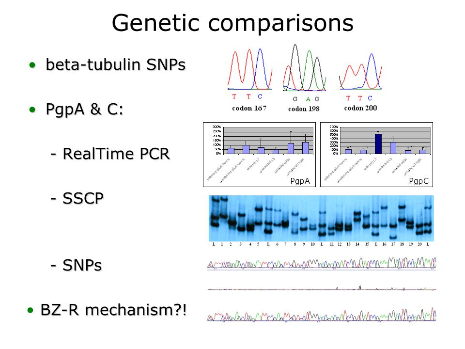 Genetic comparisons beta-tubulin SNPsbeta-tubulin SNPs PgpA & C:PgpA & C: - RealTime PCR - RealTime PCR - SSCP - SSCP - SNPs - SNPs PgpA PgpC BZ-R mechanism !