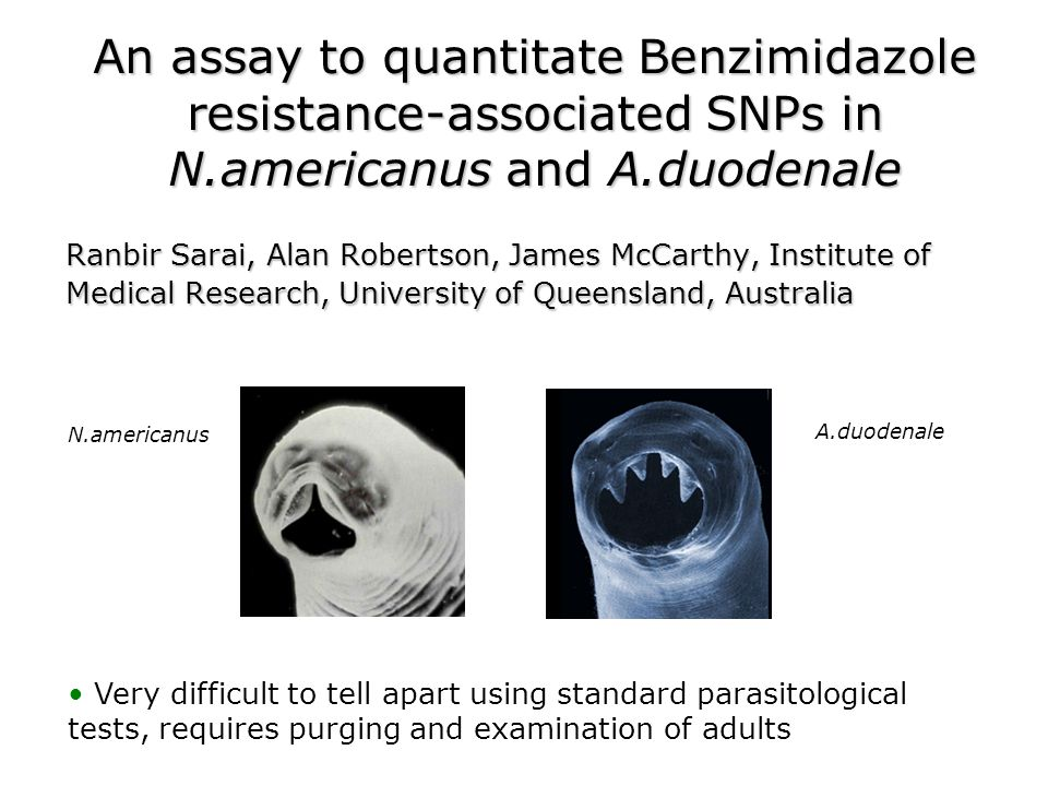 An assay to quantitate Benzimidazole resistance-associated SNPs in N.americanus and A.duodenale Ranbir Sarai, Alan Robertson, James McCarthy, Institute of Medical Research, University of Queensland, Australia N.americanus A.duodenale Very difficult to tell apart using standard parasitological tests, requires purging and examination of adults