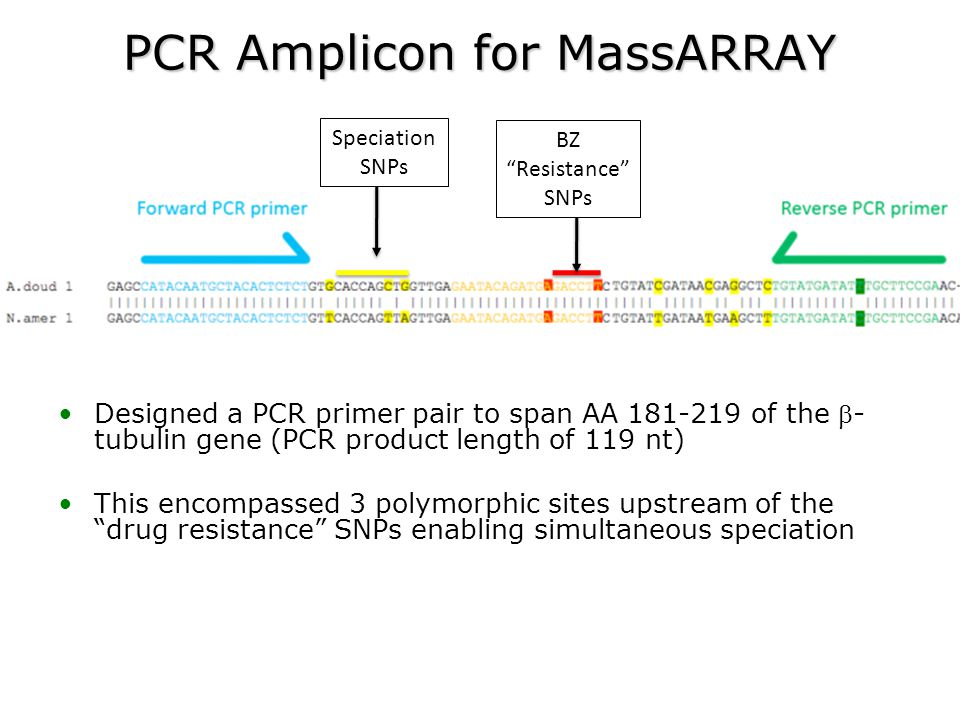"PCR Amplicon for MassARRAY Speciation SNPs BZ ""Resistance"" SNPs Designed a PCR primer pair to span AA 181-219 of the - tubulin gene (PCR product leng"