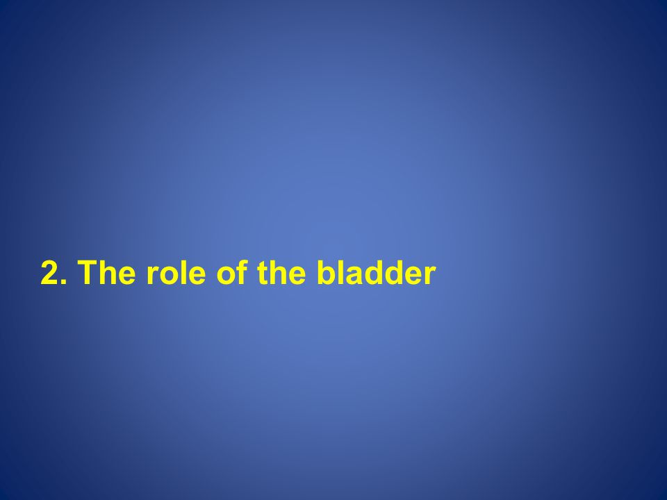 2. The role of the bladder