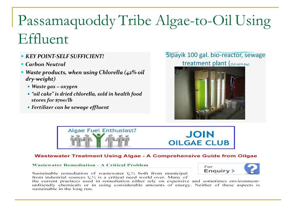 Passamaquoddy Tribe Algae-to-Oil Using Effluent