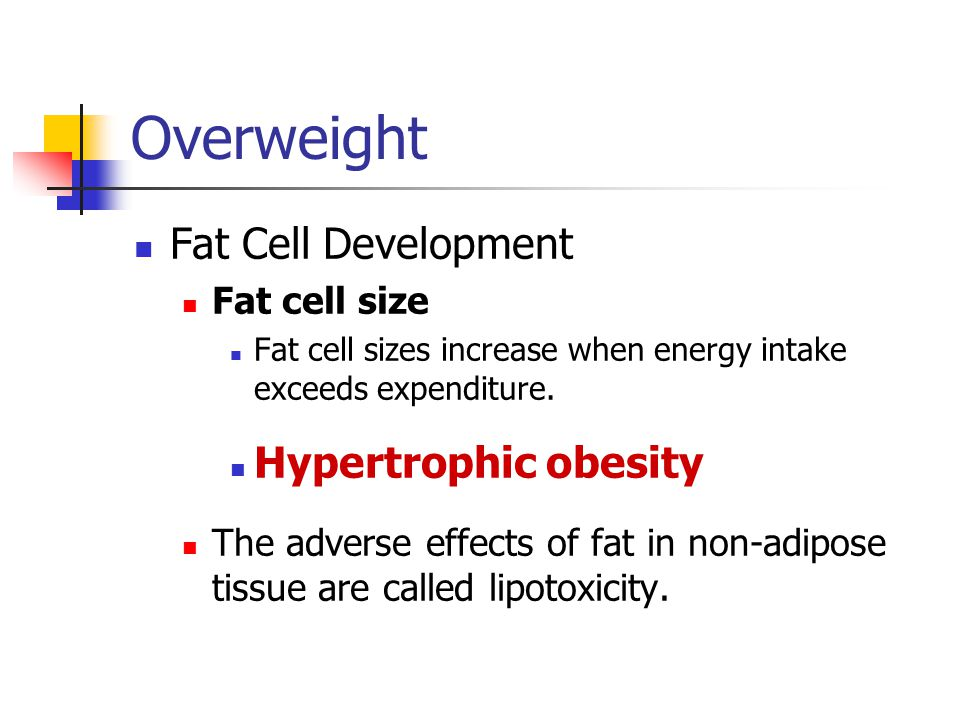 Overweight Fat Cell Metabolism Lipoprotein lipase promotes fat storage.
