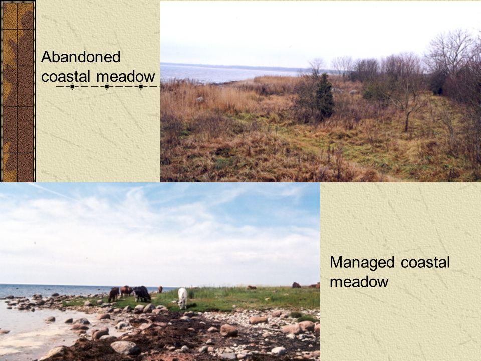 Abandoned coastal meadow Managed coastal meadow