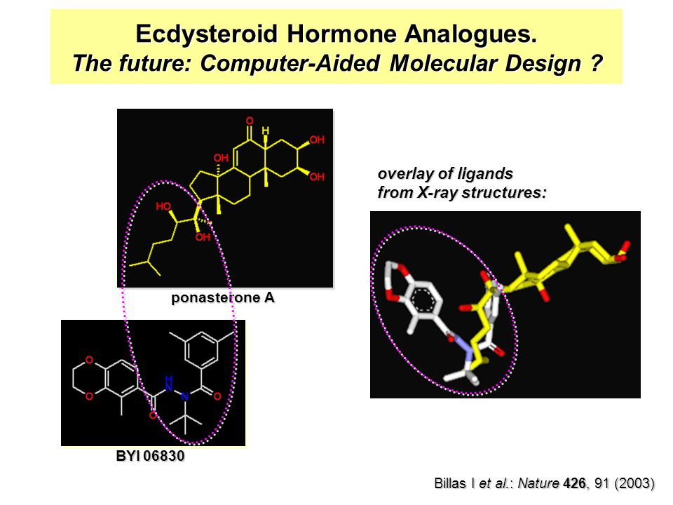 Ecdysteroid Hormone Analogues.The future: Computer-Aided Molecular Design .
