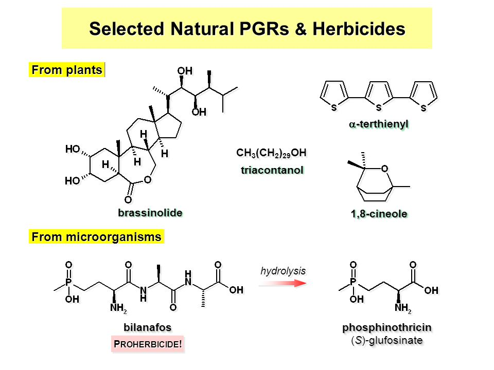 Selected Natural PGRs & Herbicides bilanafosbilanafosphosphinothricin Sglufosinate (S)-glufosinatephosphinothricin From microorganisms hydrolysis P ROHERBICIDE .