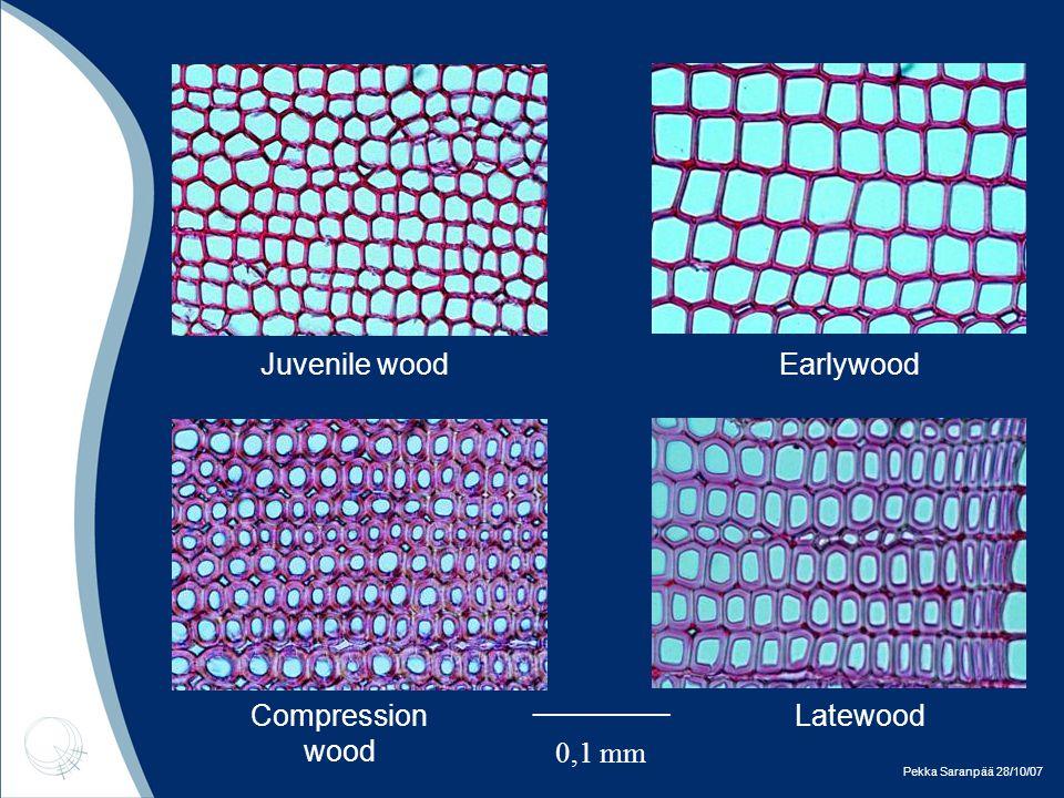Pekka Saranpää 28/10/07 Juvenile woodEarlywood Latewood Compression wood _________ 0,1 mm