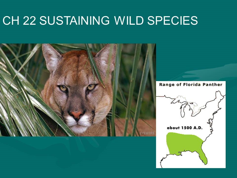 CH 22 SUSTAINING WILD SPECIES