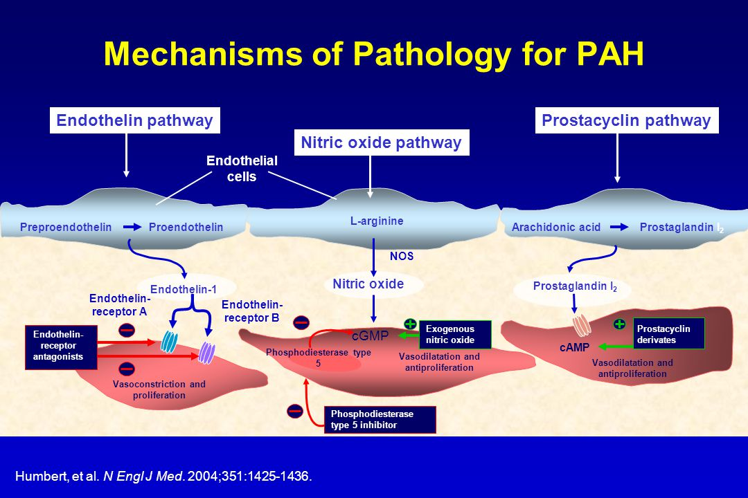 Pathophysiology of PAH Genetic Predisposition Other Risk Factors (CTD, CHD, toxins, etc.) Altered Pathways And Mediators Vasoconstriction Cell Proliferation Thrombosis Vascular Remodeling }
