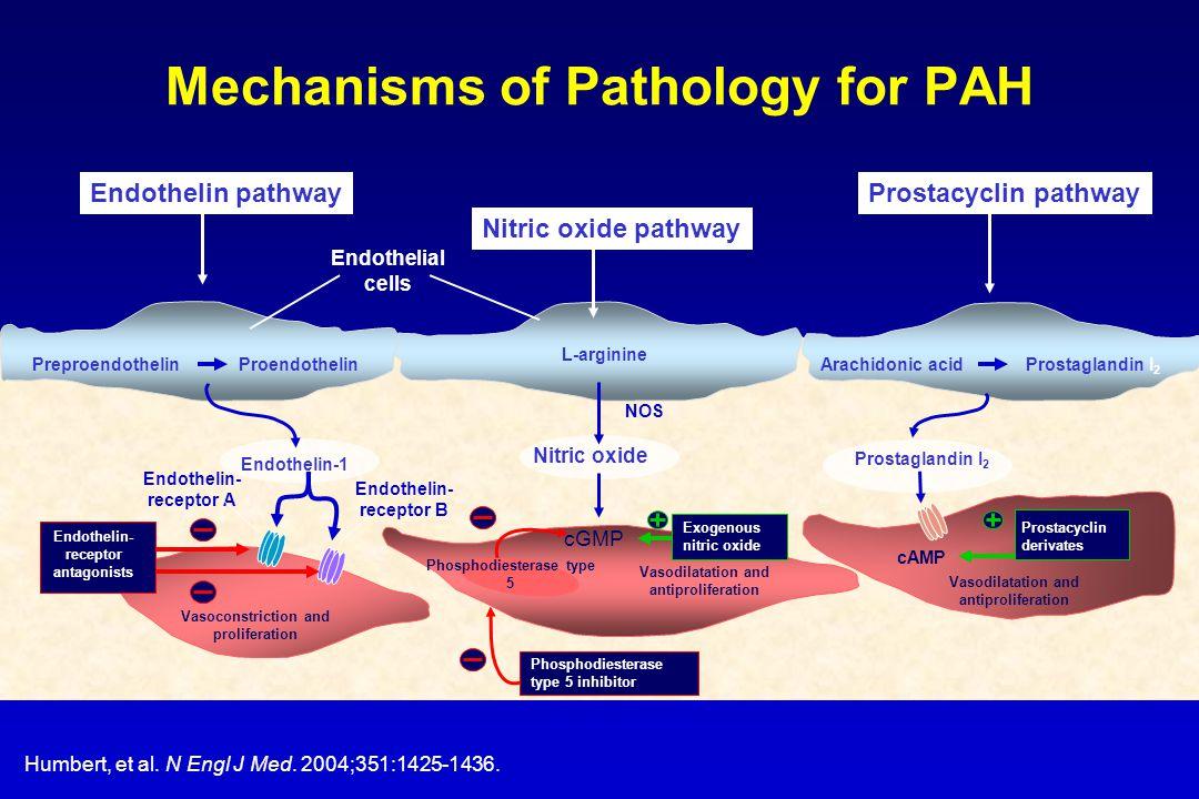 Mechanisms of Pathology for PAH Humbert, et al. N Engl J Med. 2004;351:1425-1436. Nitric oxide cGMP Vasodilatation and antiproliferation Endothelial c