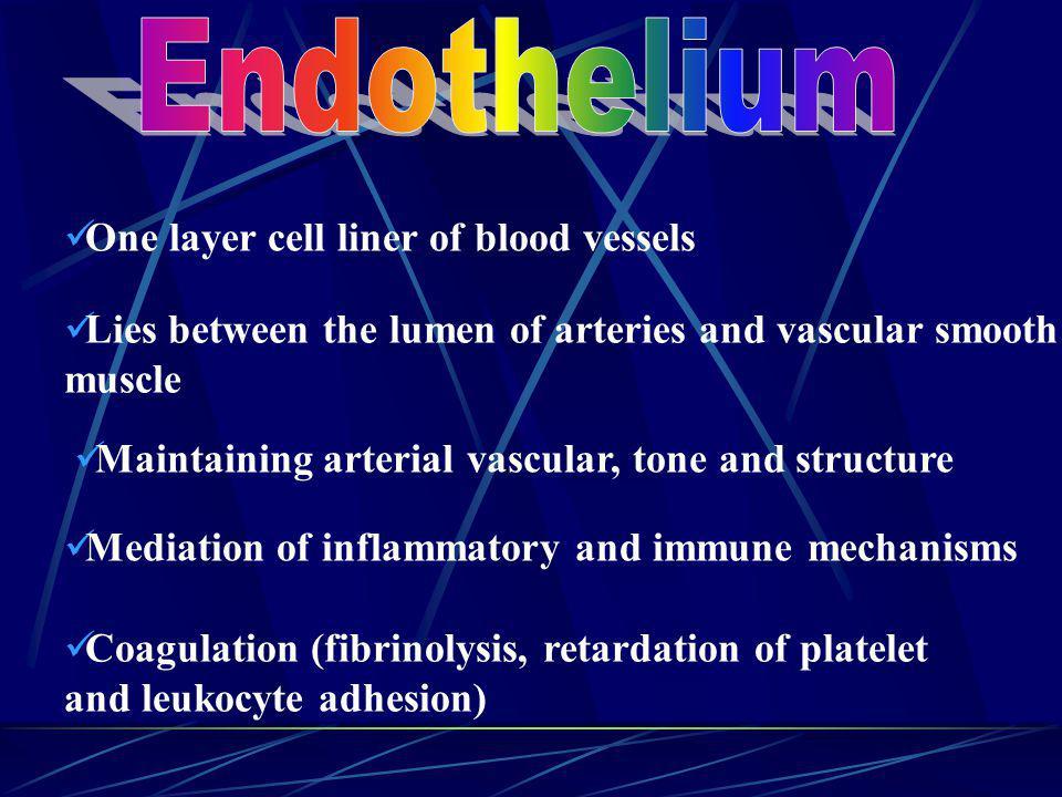 Endothelium (Gateway to the Cardiovascular System) Largest organ in the body Largest organ in the body Total surface = 6 tennis courts Total surface =