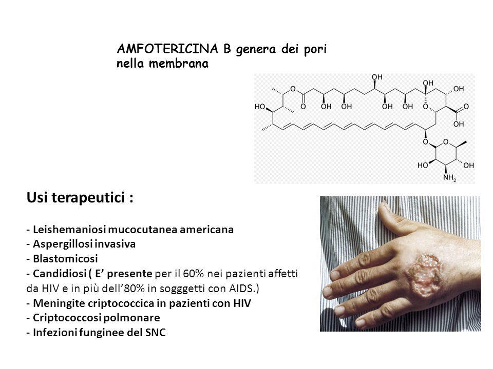 AMFOTERICINA B genera dei pori nella membrana Usi terapeutici : - Leishemaniosi mucocutanea americana - Aspergillosi invasiva - Blastomicosi - Candidi