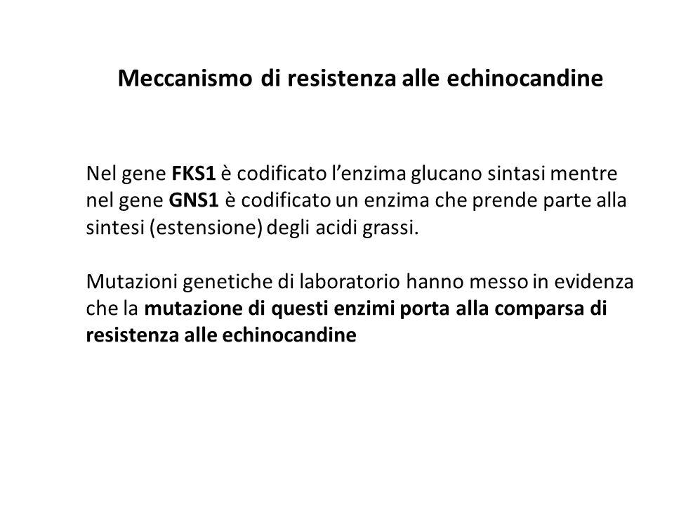 Meccanismo di resistenza alle echinocandine Nel gene FKS1 è codificato l'enzima glucano sintasi mentre nel gene GNS1 è codificato un enzima che prende