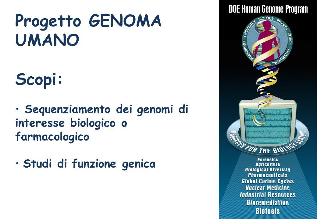 Progetto GENOMA UMANO Scopi: Sequenziamento dei genomi di interesse biologico o farmacologico Studi di funzione genica http://www.ornl.gov/sci/techresources/Human_Genome/home.shtml