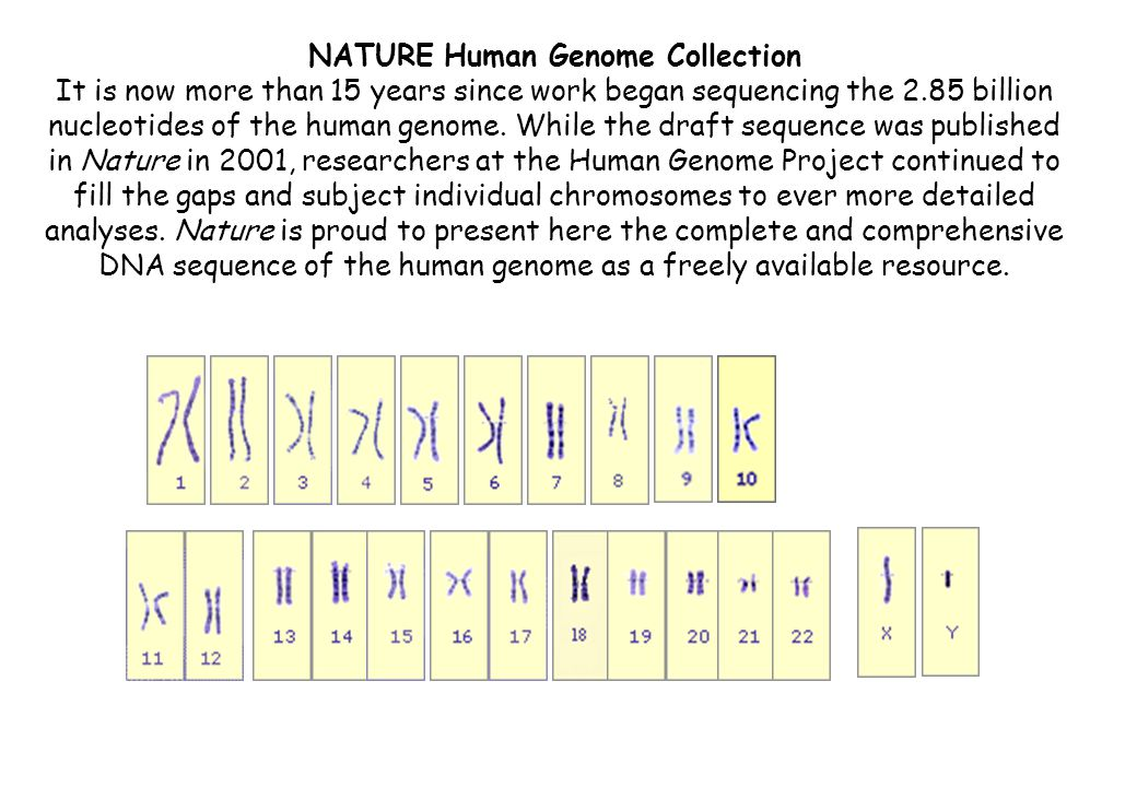 NATURE Human Genome Collection It is now more than 15 years since work began sequencing the 2.85 billion nucleotides of the human genome.