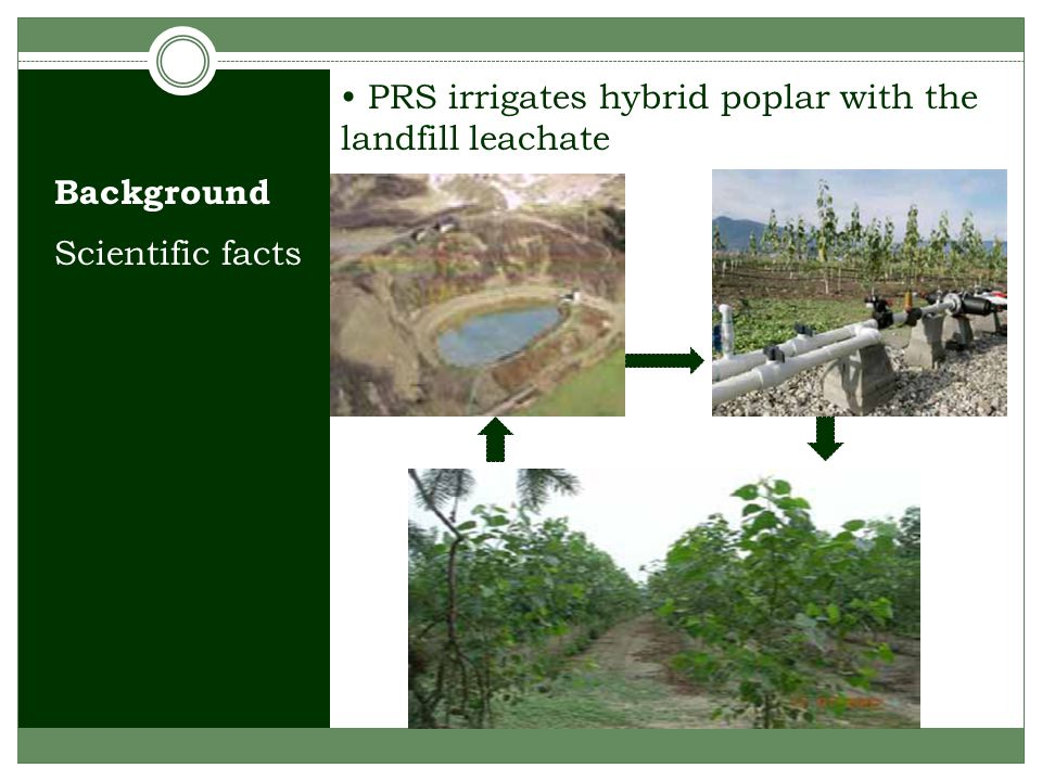 Scientific facts PRS irrigates hybrid poplar with the landfill leachate