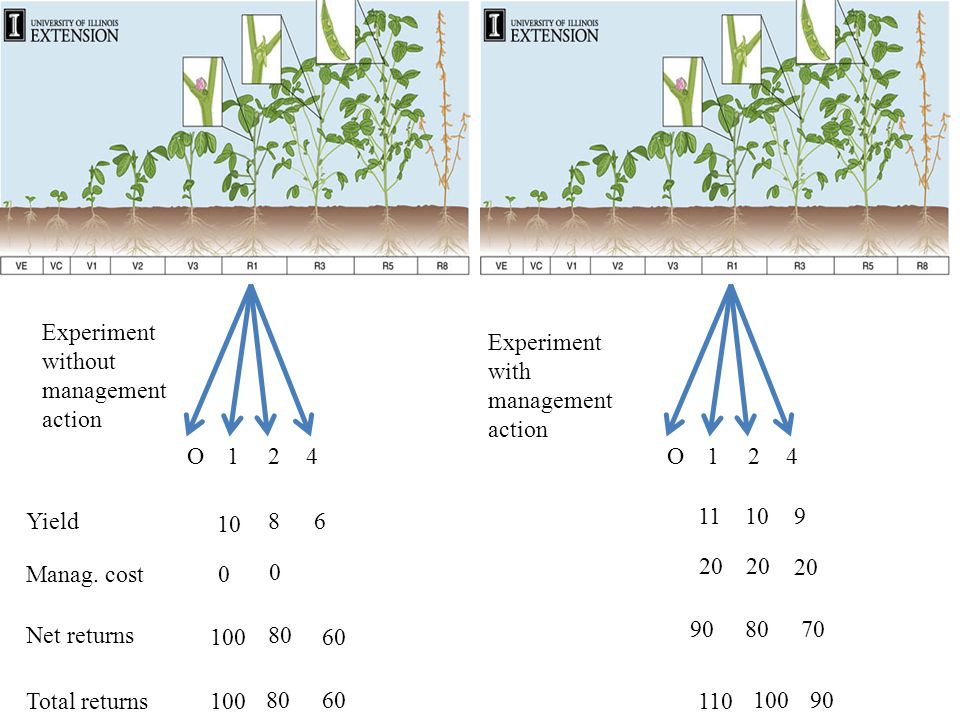 O124O124 Experiment without management action Experiment with management action Yield Manag.