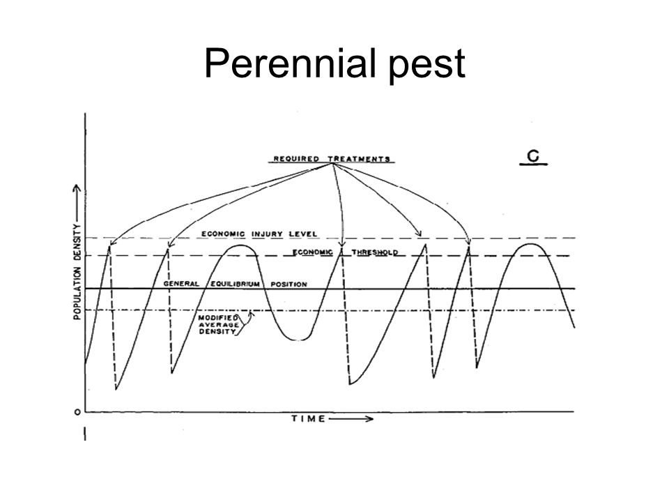 Perennial pest