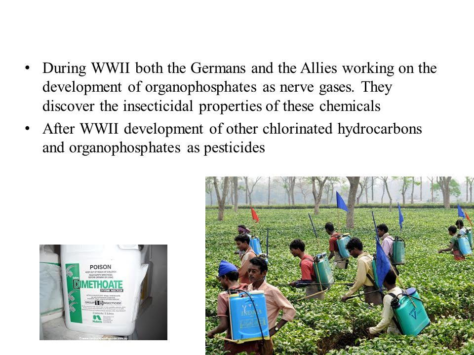 1950 s early 60 s The Green Revolution - synthetic pesticides and fertilizers the answer to world hunger!.