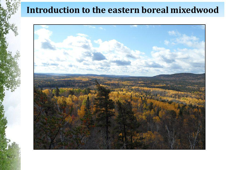 Introduction to the eastern boreal mixedwood
