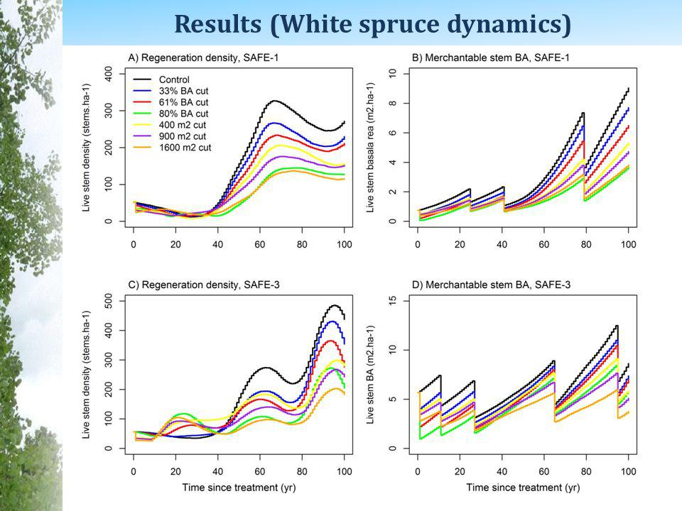 Results (White spruce dynamics)