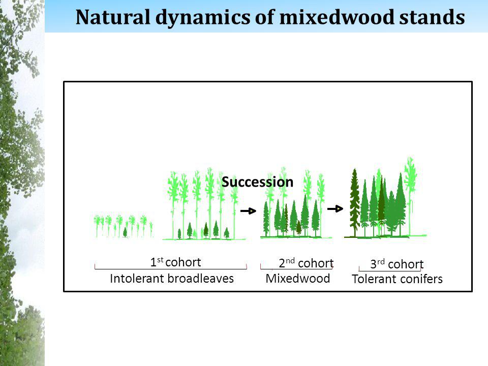 6 Natural dynamics of mixedwood stands