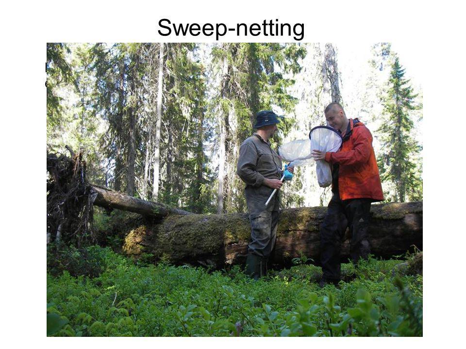 kuoriutumispyydys eli eklektori runkoeklektori Sweep-netting