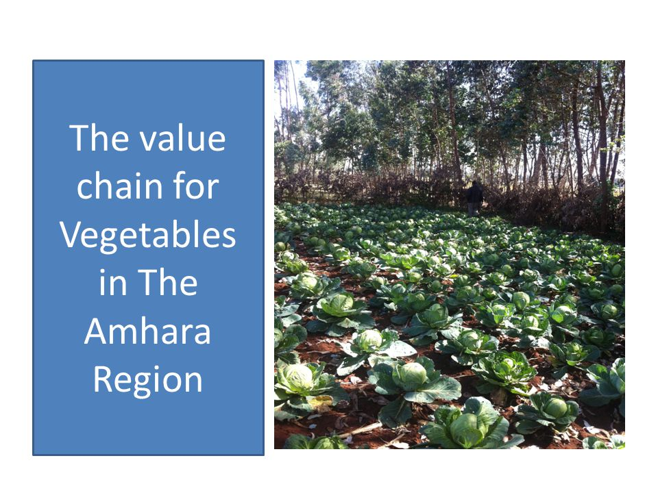 The stages of Value chain for vegetables Inputs Supply Production Post harvest Trading Processing TradingRetailingConsumption