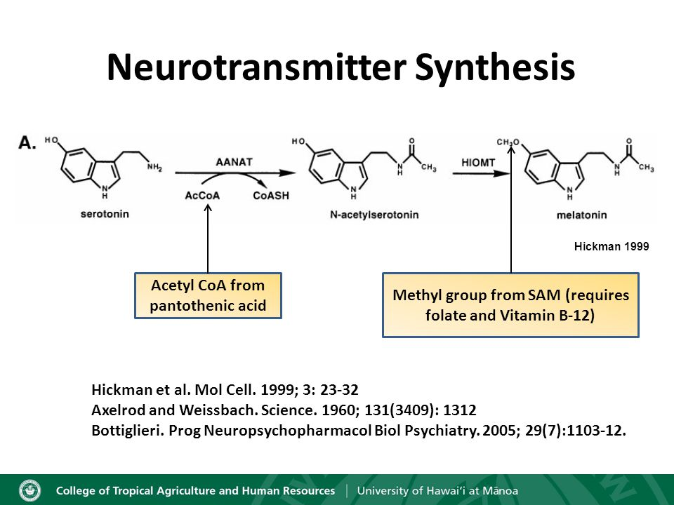 Hickman 1999 Neurotransmitter Synthesis Acetyl CoA from pantothenic acid Methyl group from SAM (requires folate and Vitamin B-12) Hickman et al.