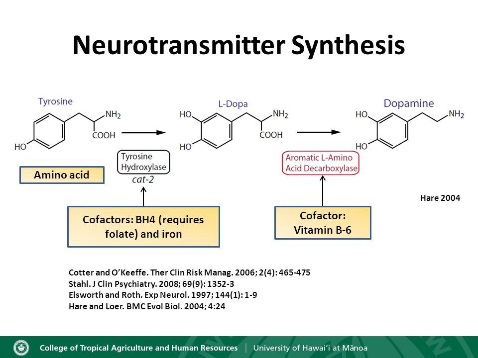 Neurotransmitter Synthesis Amino acid Hare 2004 Cofactors: BH4 (requires folate) and iron Cofactor: Vitamin B-6 Cotter and O'Keeffe.