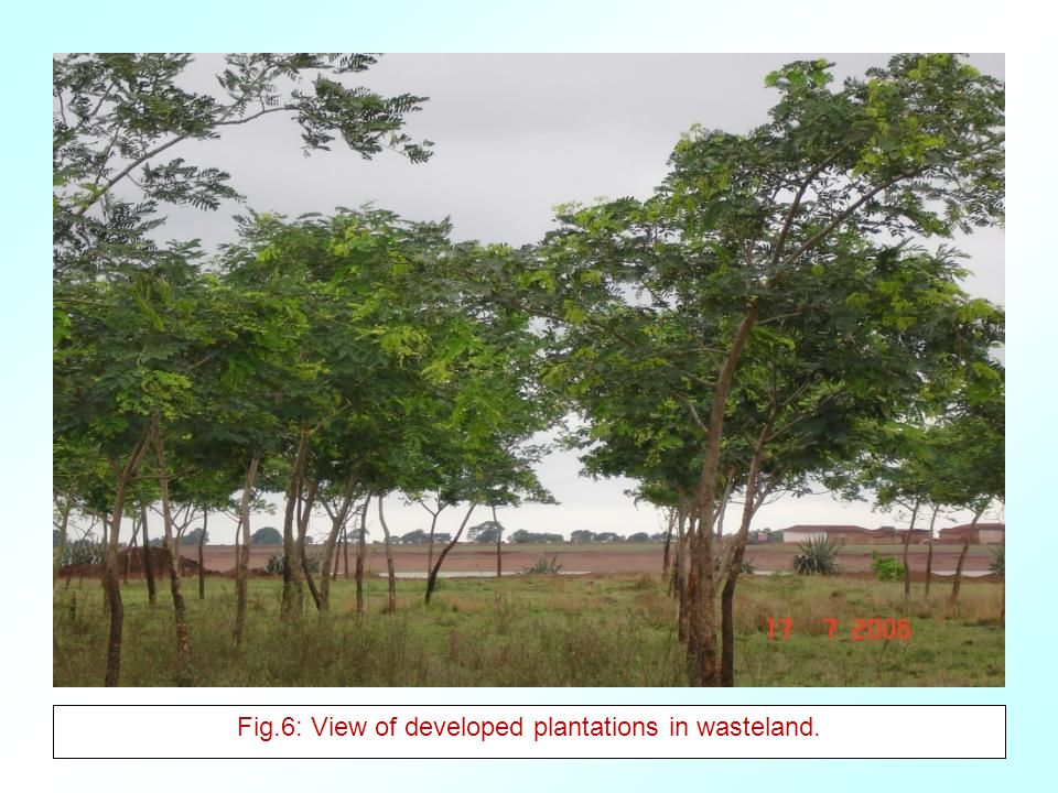 Fig.6: View of developed plantations in wasteland.