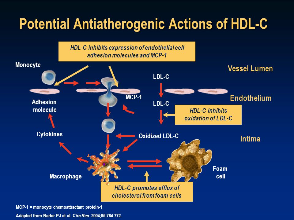 Potential Antiatherogenic Actions of HDL-C MCP-1 = monocyte chemoattractant protein-1 Adapted from Barter PJ et al.