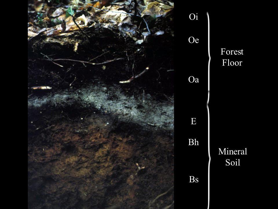 Oi Oe Oa E Bh Bs Forest Floor Mineral Soil