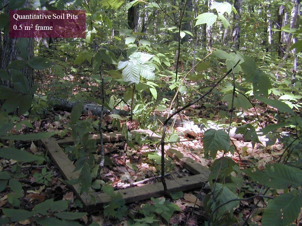 Quantitative Soil Pits 0.5 m 2 frame