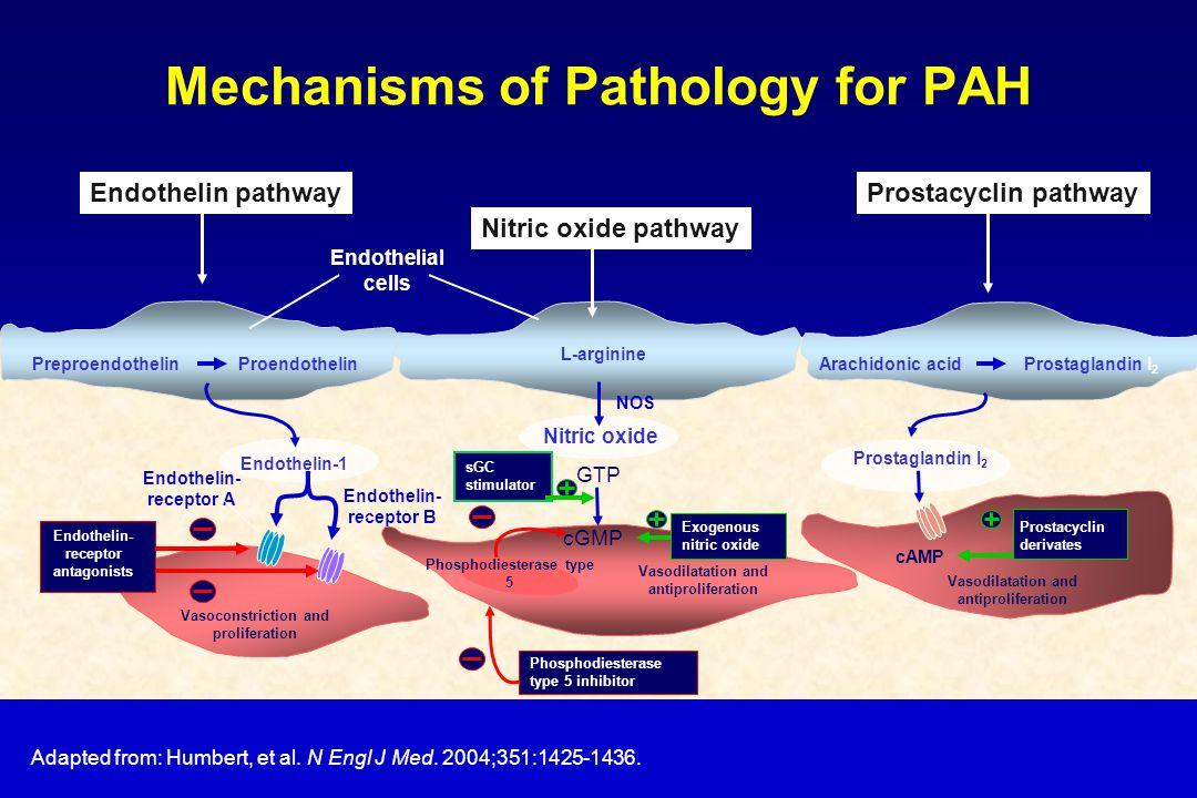 Mechanisms of Pathology for PAH Adapted from: Humbert, et al. N Engl J Med. 2004;351:1425-1436. Nitric oxide cGMP Vasodilatation and antiproliferation