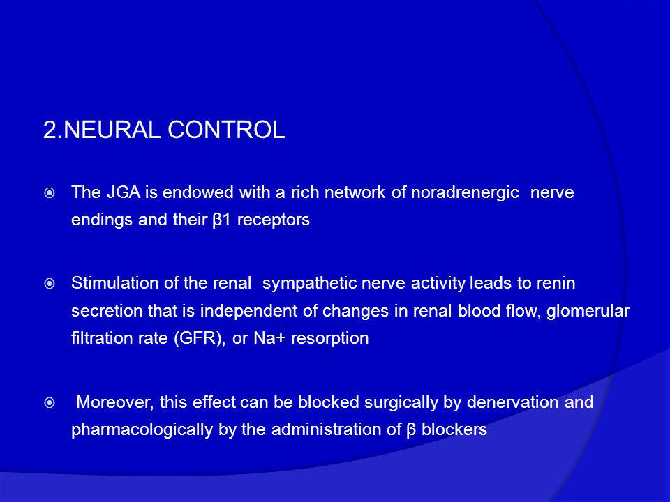 2.NEURAL CONTROL  The JGA is endowed with a rich network of noradrenergic nerve endings and their β1 receptors  Stimulation of the renal sympathetic