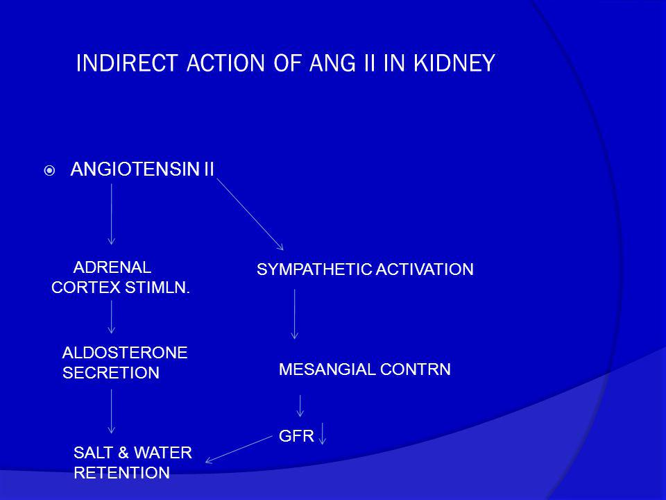 INDIRECT ACTION OF ANG II IN KIDNEY  ANGIOTENSIN II SYMPATHETIC ACTIVATION MESANGIAL CONTRN GFR ADRENAL CORTEX STIMLN. ALDOSTERONE SECRETION SALT & W