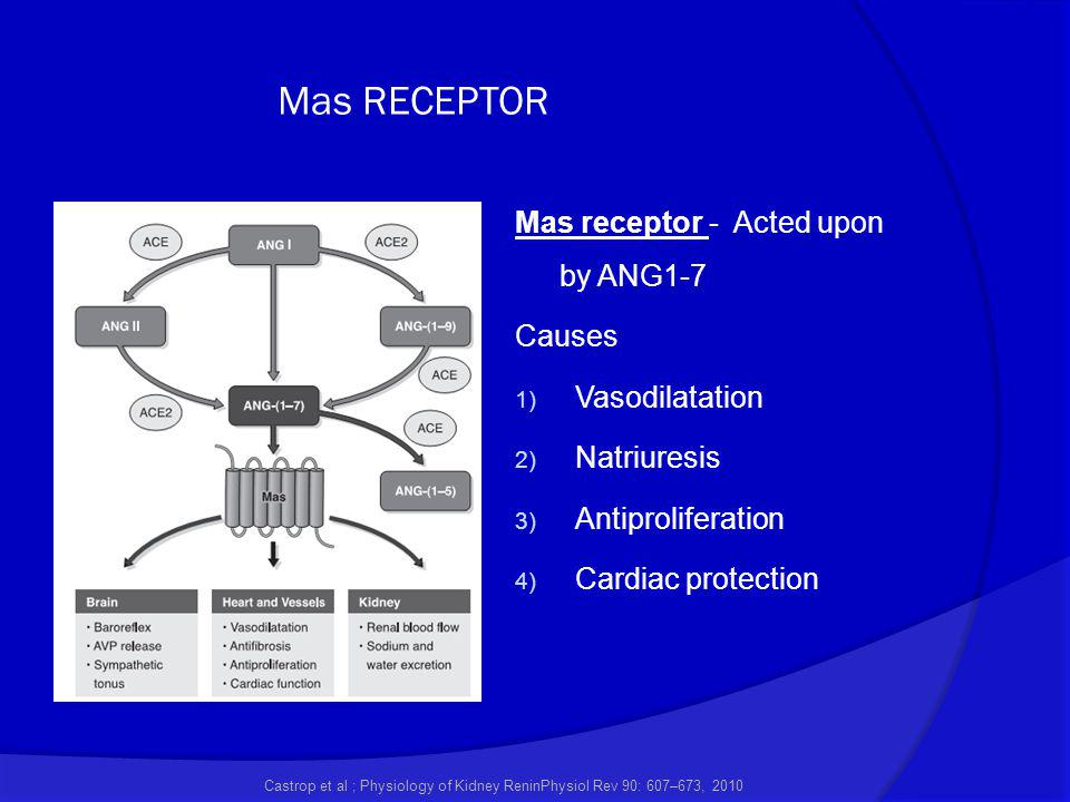 Mas RECEPTOR Castrop et al ; Physiology of Kidney ReninPhysiol Rev 90: 607–673, 2010 Mas receptor - Acted upon by ANG1-7 Causes 1) Vasodilatation 2) N