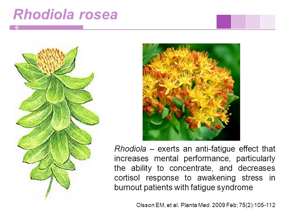 Rhodiola rosea Rhodiola – exerts an anti-fatigue effect that increases mental performance, particularly the ability to concentrate, and decreases cortisol response to awakening stress in burnout patients with fatigue syndrome Olsson EM, et al.