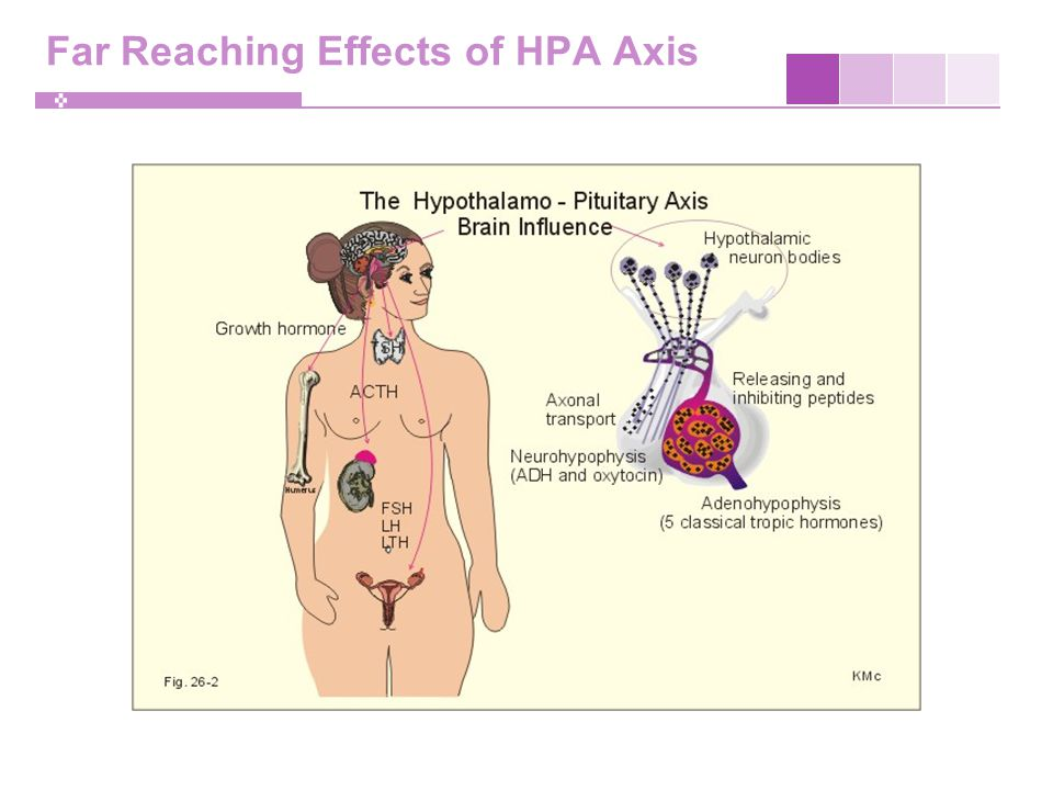 Far Reaching Effects of HPA Axis