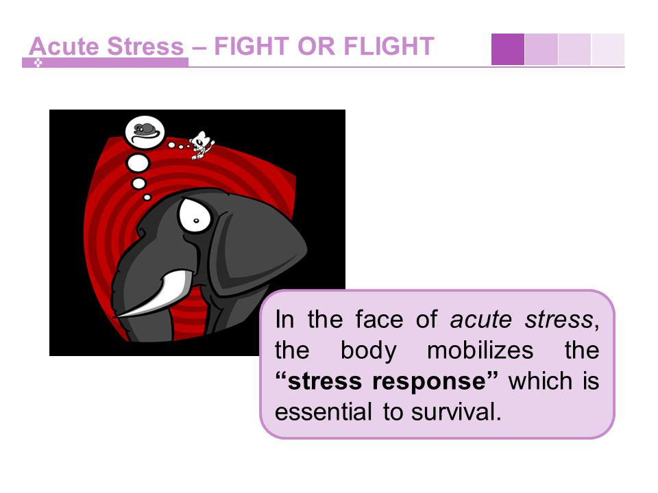Acute Stress – FIGHT OR FLIGHT In the face of acute stress, the body mobilizes the stress response which is essential to survival.