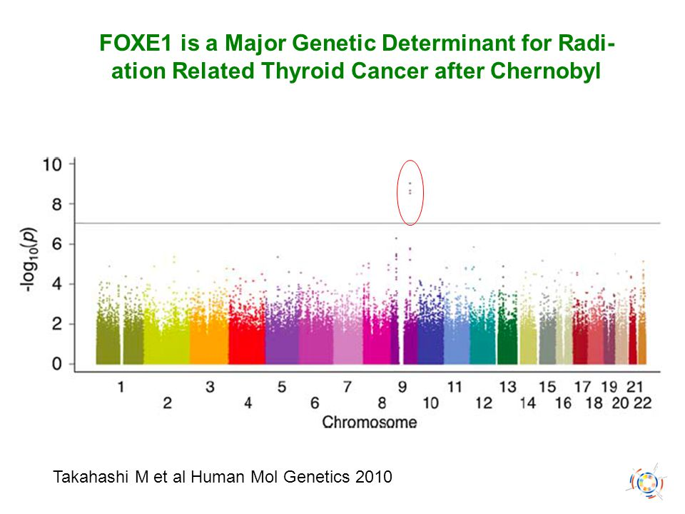 FOXE1 is a Major Genetic Determinant for Radi- ation Related Thyroid Cancer after Chernobyl Takahashi M et al Human Mol Genetics 2010