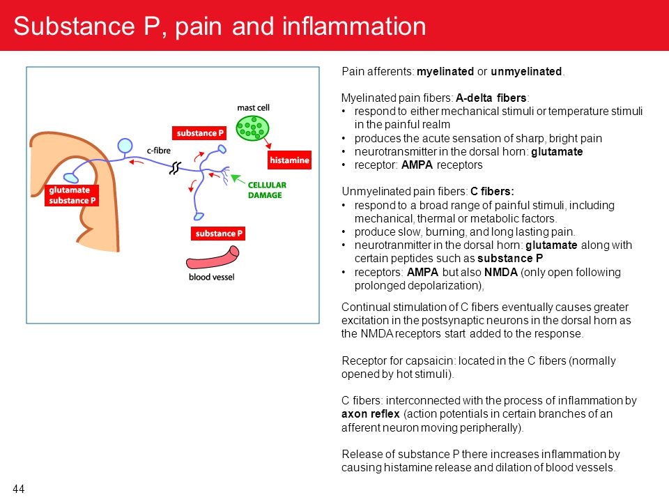 44 Substance P, pain and inflammation Pain afferents: myelinated or unmyelinated. Myelinated pain fibers: A-delta fibers: respond to either mechanical