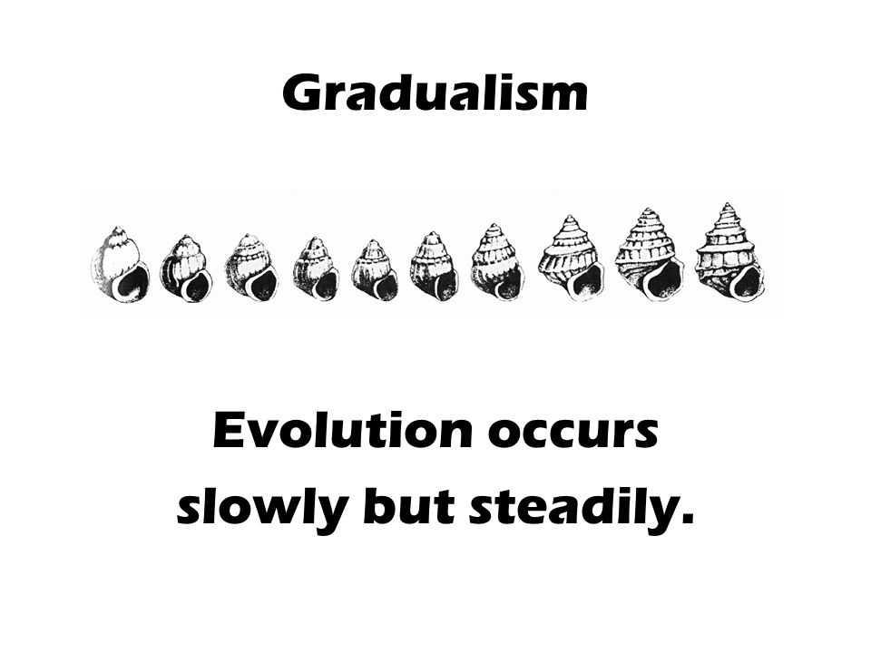Gradualism Evolution occurs slowly but steadily.
