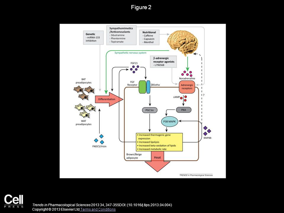 Figure 2 Trends in Pharmacological Sciences 2013 34, 347-355DOI: (10.1016/j.tips.2013.04.004) Copyright © 2013 Elsevier Ltd Terms and Conditions Terms