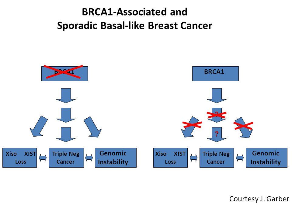 Hereditary Basal-likeSporadic Basal-like BRCA1 Xiso XIST Loss Triple Neg Cancer Genomic Instability .