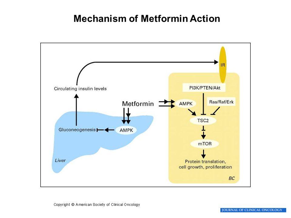 Goodwin P J et al. J Clin Oncol 2009; 27:3271-3273 Mechanism of Metformin Action