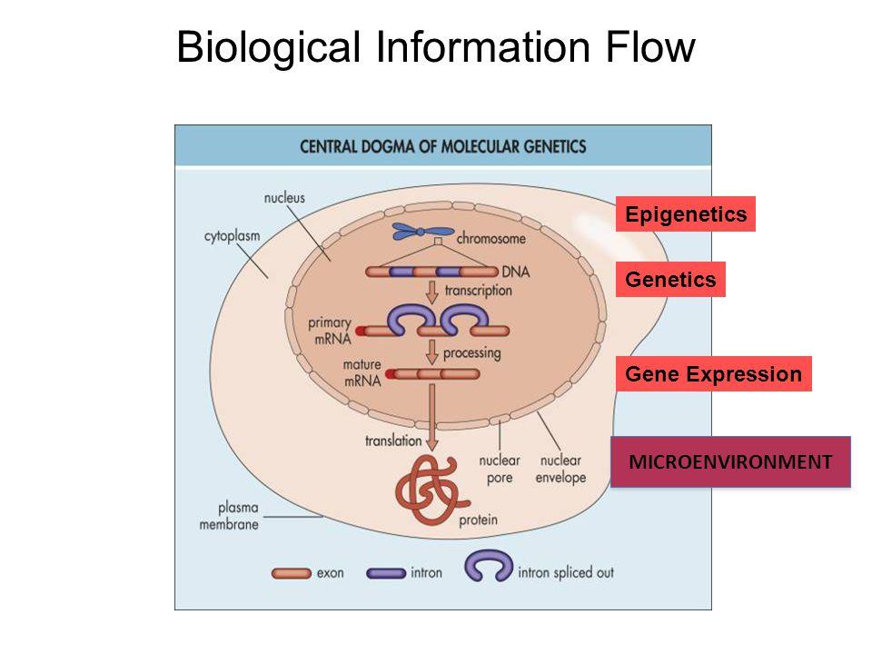 Biological Information Flow Epigenetics Gene Expression Genetics MICROENVIRONMENT