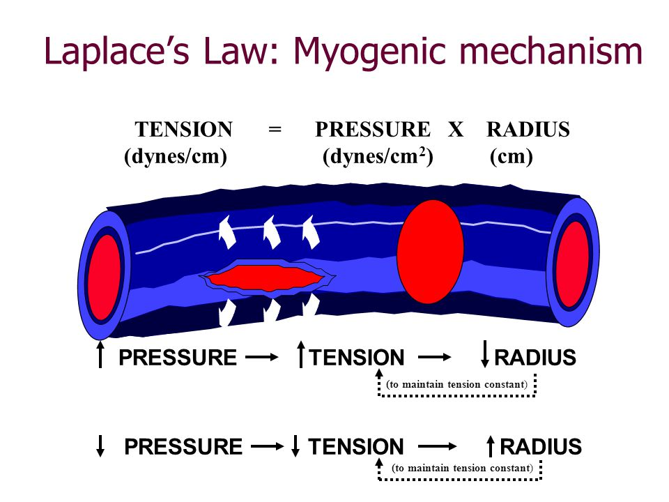 Laplace's Law: Myogenic mechanism TENSION = PRESSURE X RADIUS (dynes/cm) (dynes/cm 2 ) (cm) PRESSURE TENSION RADIUS (to maintain tension constant)