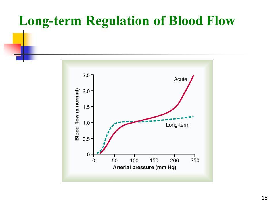 15 Long-term Regulation of Blood Flow